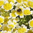 Bees and poached eggs