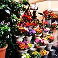 buy my flowers?