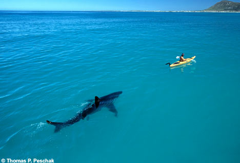 Shark0201_468x318